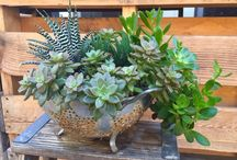 Succulents / by Wendy McMonigle WM Design House