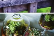 Home Projects / DIY projects for around the home and garden