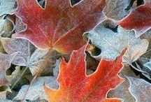 Pinspirational ~ Autumn / The warm and cosy season.