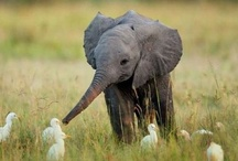 cuteness... / Adorable and cute animals!