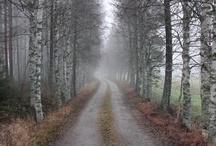 trees / bomen / wees zuinig op bomen!  / by Adriana Meijer
