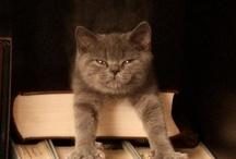 Gatti editoriali / Quest'autunno non perdetevi i gatti tropicali...