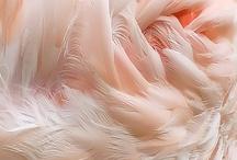 Nude,Pink,Blush & Champagne