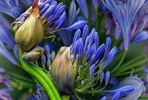 Nature / Flowers