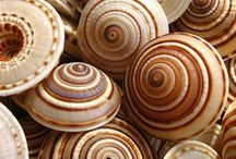Nature / Shells