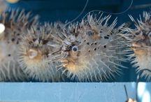 Nature / Sea creatures