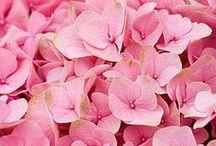 Color Inspiration / Pink
