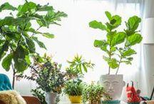 Plants & Gardening / Plants and gardening inspiration.