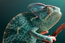 geo - fauna / wildlife that never ceases to amaze