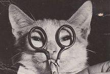 Cats / Cats, Cats, Cats.