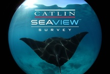 buzz - catlin seaview survey / Adventure Junky's very first client is the Catlin Seaview Survey. The Catlin Seaview Survey is a visionary series of scientific expeditions around the globe, starting with an icon of the ocean, the Great Barrier Reef in Australia. Using specially designed underwater cameras, the Catlin Seaview Survey will reveal the Great Barrier Reef like never before, in high-resolution, 360 degree panoramic vision.  See and read more on our Facebook page - www.facebook.com/adventurejunky
