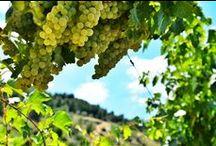Ogni territorio la sua vendemmia  / http://bit.ly/194aaHi Ogni Territorio, la sua #Vendemmia. Inizia domani la vendemmia nelle aziende #PLANETA For each #terroir, its own #harvest. The harvest begins tomorrow in the Planeta #vineyards #Vederevendemmia #winelover