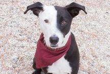 Pets in need of homes / Pets in need of homes
