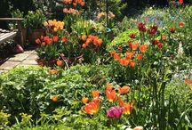 Cottage gardening / All things gardening