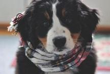 puppy love | pets | animals