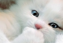 Adorable Pets / What would we do without them!
