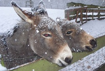 Animals in the snow | Dieren in de sneeuw / All kind of animals in the snow