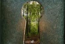 Wonderland / by Sonya Stacey-Corona