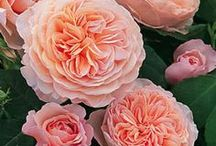 Floral Arrangements & Gardens