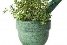 santé/plantes