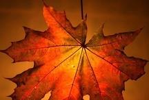 Autumn / My favourite season
