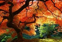 Lovely Trees / by Erica Castillo