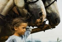 (AMISH) country / Life can be so simple / by Suzanne Cooney
