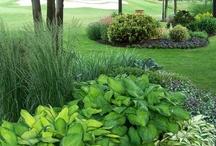 Garden and herbs