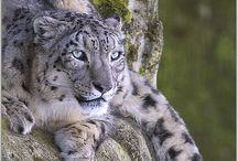 I love the zoo! / by Joan Neelley