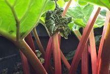 Urban Gardening / Obst, Gemüse, Beeren und Kräuter ganz einfach auf dem Balkon anbauen