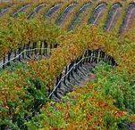 Temecula Wine Country