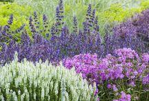 Garden Chic / Flowers! / by Bonnie Mattson