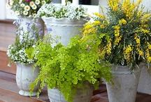 Plants & Gardening / Gardening