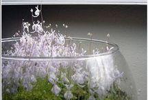 Glass Gardens. / Stunning examples of vivariums, terrariums, and the art of wabi kusa. Plus, plants suitable for life in glass gardens and the occasional gardening tutorial. / by Kate Sawyer