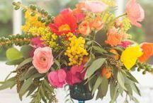 bloom / Flowers + plants.