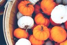 autumn / by Rachel Hutchinson♡