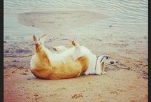 Dog stuff! / by Amber von Nagel