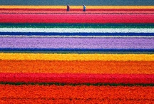 plethora of colors / by Margaret Long