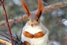Squirrels for Larry