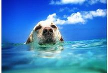 #TuttiAlMare / Le #foto più buffe dei nostri #amici #Zampa #Animali mentre giocano al mare, in #spiaggia, nuotano e si divertono in #acqua.