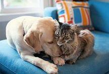 Casa, dolce casa. / Chi #comanda veramente dentro #casa? A giudicare dalle #immagini, sembrano essere proprio loro: i nostri Amici Zampa Animali.