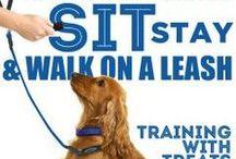 Training We Love