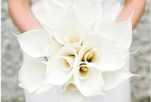 White Weddings / White wedding details and decor / by EnGAYged Weddings