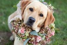 Fur Baby Wedding Attire / Ideas for how to dress your furry family members on your wedding day.