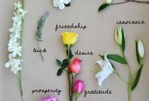 Wedding Flower Names / A guide to identifying commonly used wedding flowers.