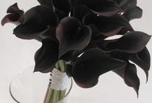 Black / by Megumi ❤️