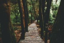 """Paths to Follow / """"The road goes ever on and on. Down from the door from which it began."""""""