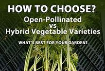 Beginner Organic Gardening / New to organic gardening? Check out our articles and links to help you have a successful growing season!