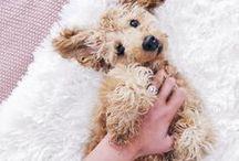 RESCUE / rescue, rescue dog, rescue dogs, puppies, adopt dont shop