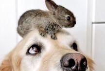 pets / by Sandra Stephens